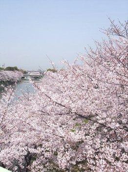 20100419sakura.jpg