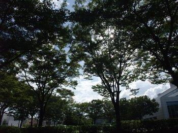 20110704kokage.jpg