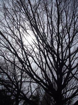 20120416shounairyokuchi001.jpg