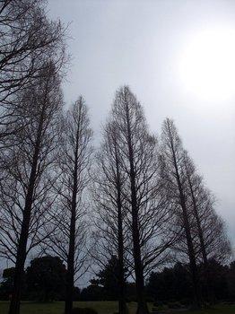20120416shounairyokuchi002.jpg