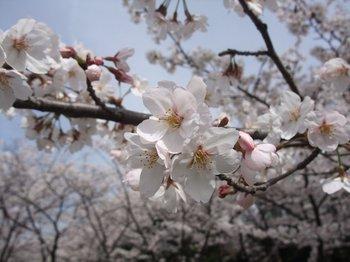 20120416shounairyokuchi004.jpg