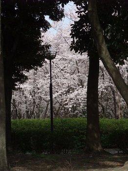20120416shounairyokuchi005.jpg