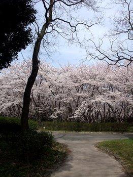 20120416shounairyokuchi006.jpg