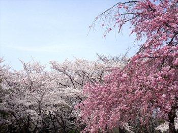 20120416shounairyokuchi007.jpg