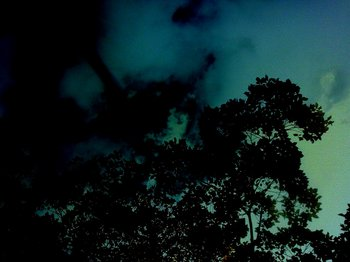 暗闇の木々.jpg